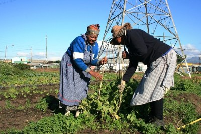 Women farmers working in an urban garden growing their own food.