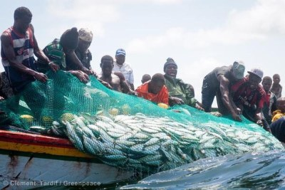 Senegalese fishermen pulling in a net full of fish (file photo).