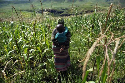 A maize farmer and her child in Lesotho.