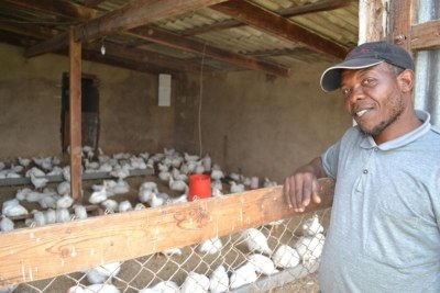 Poultry farm in South Africa