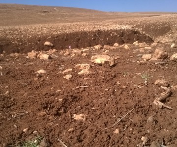 Morocco: No Tilling on This Farm #COP22