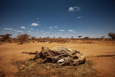 The effects of drought (file photo).