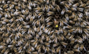 Bees Help Fight Deforestation in Zimbabwe