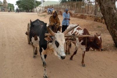 Un charriot dans le Sud-Est de Madagascar.