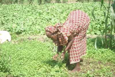A farmer in Senegal.