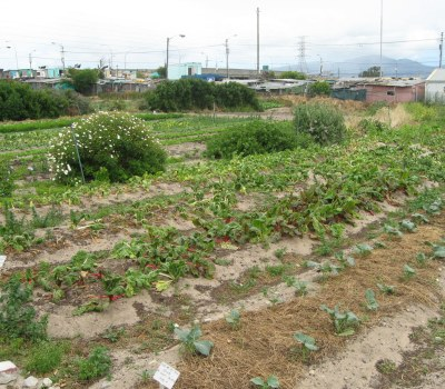 Urban Food Gardens Take Off
