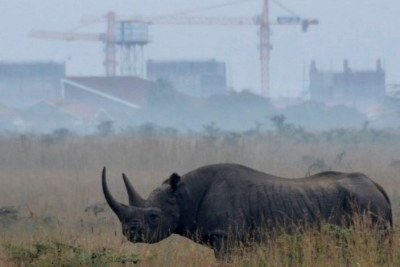 The Kruger National Park has lost 362rhinos to poaching. Limpopo, KwaZulu-Natal and the North West provinces continue to be a target for poachers, collectively accounting for the loss of 186 rhinos.