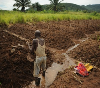 Local Irrigation Solutions Boost Yields for African Farmers