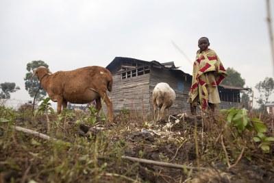 Des populations déplacées dans l'Est de la RDC
