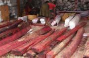 La RDC également touchée par le trafic de bois rose