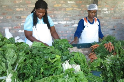 Sorting organic vegetables.