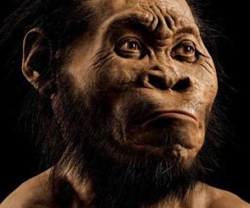 Small Brain Didn't Hold Homo Naledi Back!