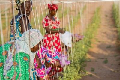 Cultivatrices sénégalaises.