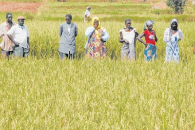 The Kilimanjaro Agricultural Training Centre has offered to train agricultural experts in East Africa on the improved production of rice.