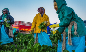 Why Medium-Scale Farms Are On the Rise in Africa