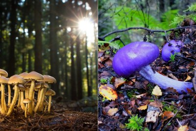 Mushrooms on the forest floor.
