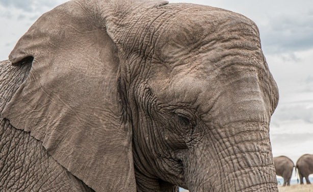 Trump elephant trophy-hunting move sparks stampede of