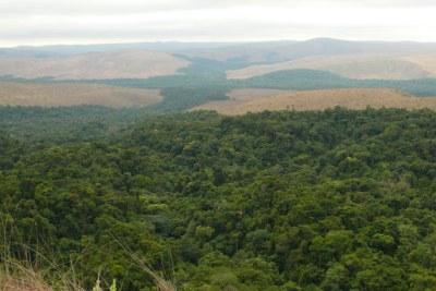 Illustration - Le parc national du Plateau Batéké est situé à la transition des habitats forestiers et des savanes. Il offre une vue imprenable sur de petites étendues de forêt le long de la rivière Mpassa qui s'étendent dans la savane.