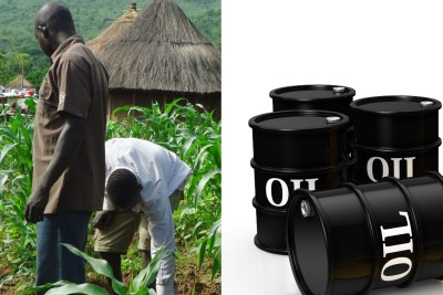 Left: Farmers in a maize file. Right: Oil barrels