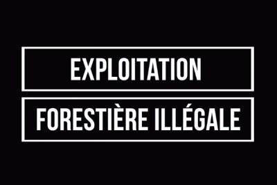 Dans ce deuxième volet de la série Intelligence Brute d'EIA, nous vous présentons la société Wan Chuan Timber Sarl (WCTS), très probablement l'un des pires responsables de crimes commis contre les forêts du Gabon et les personnes qui en dépendent.