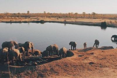A herd of elephants in Hwange National Park (file photo).