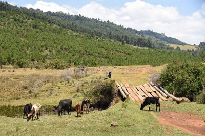 The area where the Kimwarer dam would have been built in Elgeyo-Marakwet.