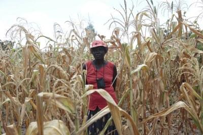 Selon le PAM, plus d'un tiers de la population rurale du Zimbabwe sera en situation d'insécurité alimentaire d'ici octobre 2019.
