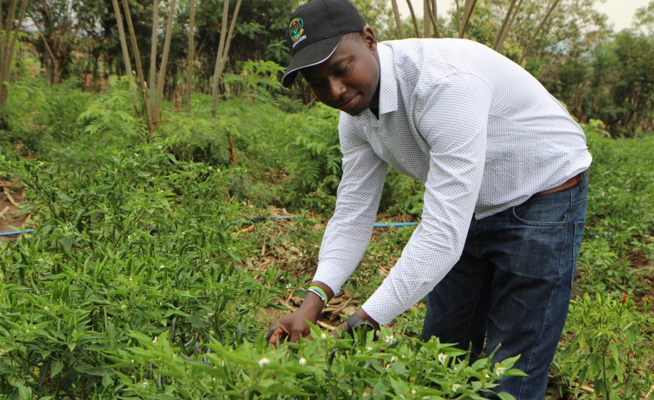 Africa: COVID-19 Recovery Is a Chance to Improve the African Food System