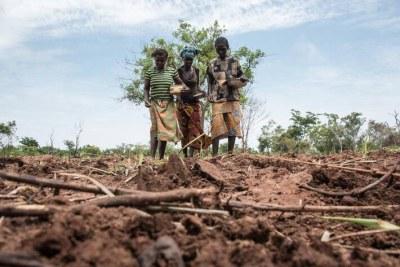 Des agricultrices en République centrafricaine où la moitié de la population souffre de la faim.